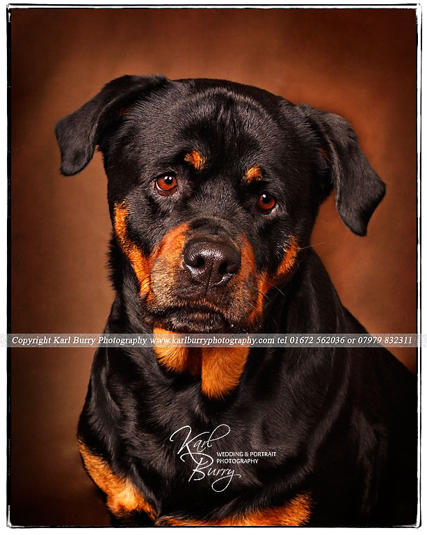Wiltshire_Dog_Photography