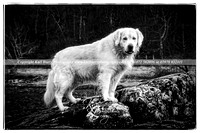 Wiltshire_Dog_Photography_01