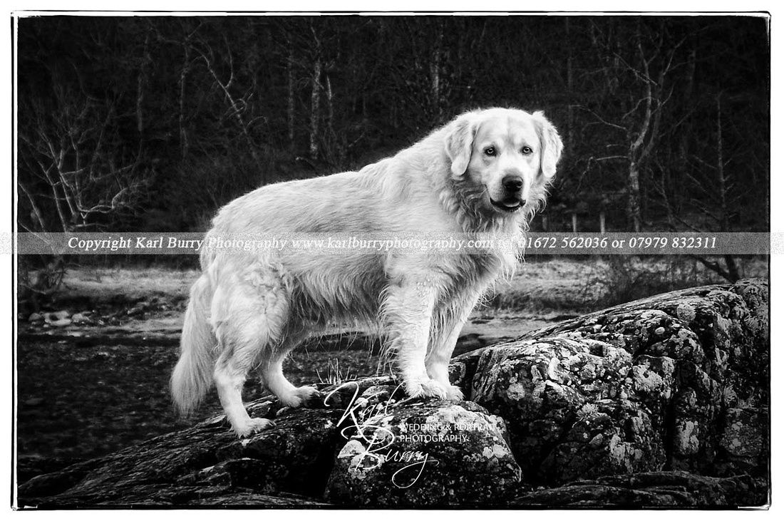 Dog portrait photography in Wiltshire